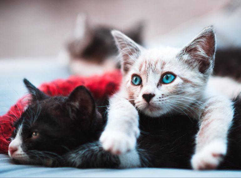 image3 770x569 - Kucing Dan Islam